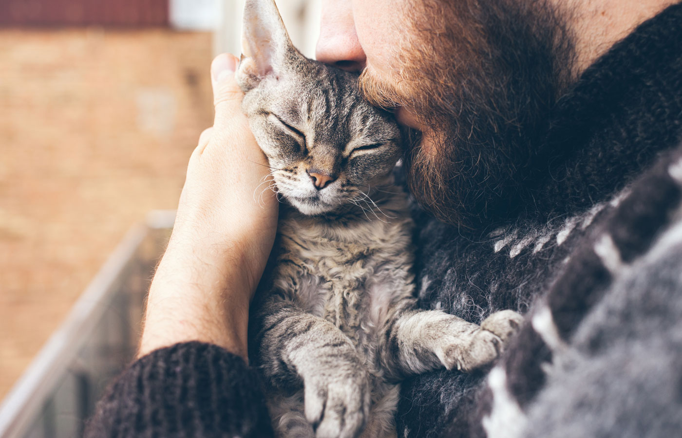 Close-up of beard man in icelandic sweater who is holding and kissing his cute purring Devon Rex cat